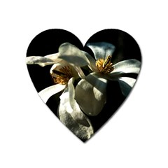 Two White Magnolia Flowers Heart Magnet by FunnyCow