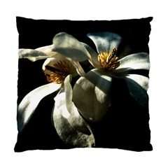 Two White Magnolia Flowers Standard Cushion Case (two Sides)