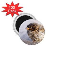 Funny Wet Sparrow Bird 1 75  Magnets (100 Pack)  by FunnyCow