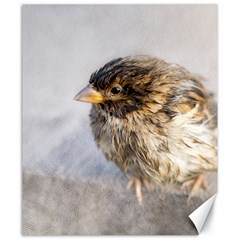 Funny Wet Sparrow Bird Canvas 20  X 24   by FunnyCow