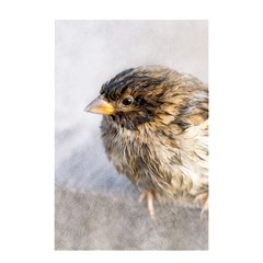 Funny Wet Sparrow Bird Shower Curtain 48  X 72  (small)  by FunnyCow