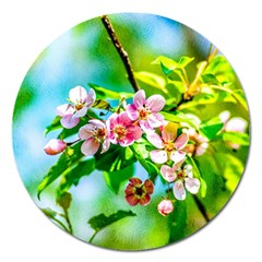 Crab Apple Flowers Magnet 5  (round) by FunnyCow