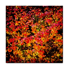 Orange, Yellow Cotoneaster Leaves In Autumn Tile Coasters by FunnyCow