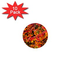 Orange, Yellow Cotoneaster Leaves In Autumn 1  Mini Magnet (10 Pack)  by FunnyCow