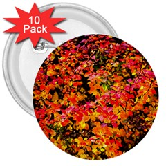 Orange, Yellow Cotoneaster Leaves In Autumn 3  Buttons (10 Pack)  by FunnyCow