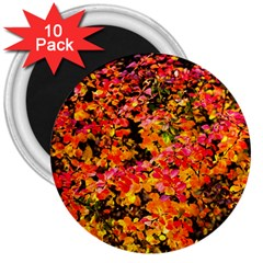 Orange, Yellow Cotoneaster Leaves In Autumn 3  Magnets (10 Pack)  by FunnyCow