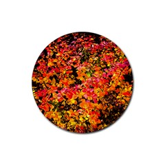 Orange, Yellow Cotoneaster Leaves In Autumn Rubber Coaster (round)  by FunnyCow