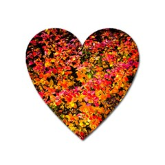 Orange, Yellow Cotoneaster Leaves In Autumn Heart Magnet by FunnyCow