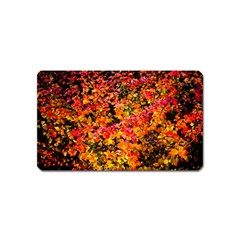 Orange, Yellow Cotoneaster Leaves In Autumn Magnet (name Card)