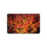 Orange, yellow cotoneaster leaves in autumn Magnet (Name Card) Front