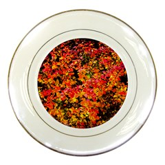Orange, Yellow Cotoneaster Leaves In Autumn Porcelain Plates by FunnyCow
