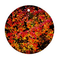 Orange, Yellow Cotoneaster Leaves In Autumn Round Ornament (two Sides) by FunnyCow