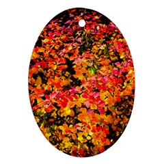 Orange, Yellow Cotoneaster Leaves In Autumn Oval Ornament (two Sides) by FunnyCow