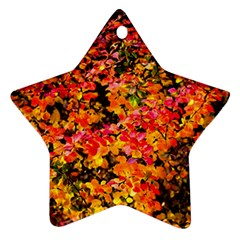 Orange, Yellow Cotoneaster Leaves In Autumn Star Ornament (two Sides) by FunnyCow