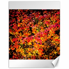 Orange, Yellow Cotoneaster Leaves In Autumn Canvas 12  X 16   by FunnyCow