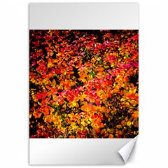 Orange, Yellow Cotoneaster Leaves In Autumn Canvas 20  X 30   by FunnyCow