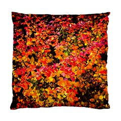 Orange, Yellow Cotoneaster Leaves In Autumn Standard Cushion Case (one Side) by FunnyCow