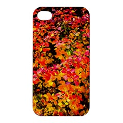 Orange, Yellow Cotoneaster Leaves In Autumn Apple Iphone 4/4s Hardshell Case by FunnyCow