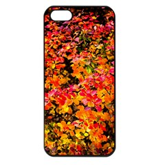 Orange, Yellow Cotoneaster Leaves In Autumn Apple Iphone 5 Seamless Case (black) by FunnyCow