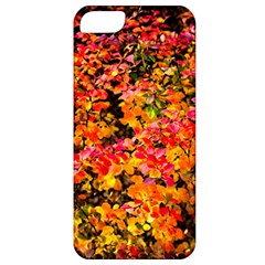 Orange, Yellow Cotoneaster Leaves In Autumn Apple Iphone 5 Classic Hardshell Case by FunnyCow