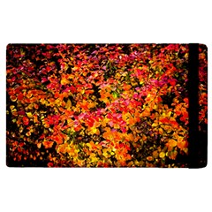 Orange, Yellow Cotoneaster Leaves In Autumn Apple Ipad 2 Flip Case by FunnyCow