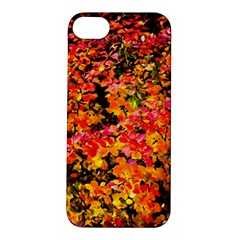 Orange, Yellow Cotoneaster Leaves In Autumn Apple Iphone 5s/ Se Hardshell Case by FunnyCow