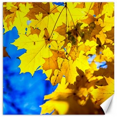 Yellow Maple Leaves Canvas 20  X 20   by FunnyCow