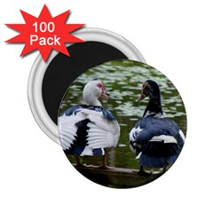 Muscovy Ducks At The Pond 2 25  Magnets (100 Pack)  by IIPhotographyAndDesigns