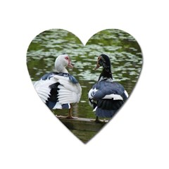 Muscovy Ducks At The Pond Heart Magnet by IIPhotographyAndDesigns