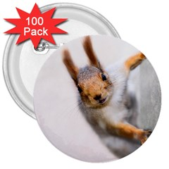Curious Squirrel 3  Buttons (100 Pack)  by FunnyCow