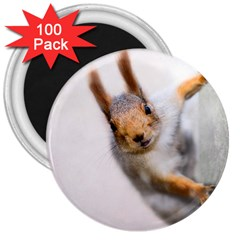 Curious Squirrel 3  Magnets (100 Pack) by FunnyCow