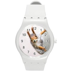 Curious Squirrel Round Plastic Sport Watch (m) by FunnyCow