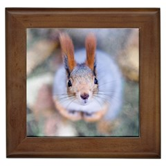 Squirrel Looks At You Framed Tiles by FunnyCow