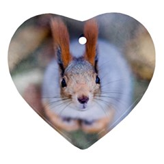 Squirrel Looks At You Ornament (heart) by FunnyCow