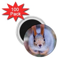 Squirrel Looks At You 1 75  Magnets (100 Pack)  by FunnyCow