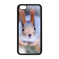 Squirrel Looks At You Apple Iphone 5c Seamless Case (black) by FunnyCow