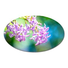 Beautiful Pink Lilac Flowers Oval Magnet by FunnyCow