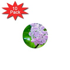 Elegant Pink Lilacs In Spring 1  Mini Buttons (10 Pack)  by FunnyCow