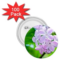 Elegant Pink Lilacs In Spring 1 75  Buttons (100 Pack)  by FunnyCow