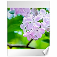Elegant Pink Lilacs In Spring Canvas 12  X 16   by FunnyCow