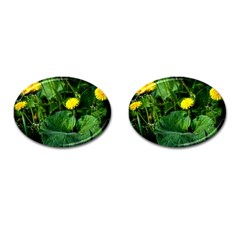 Yellow Dandelion Flowers In Spring Cufflinks (oval) by FunnyCow