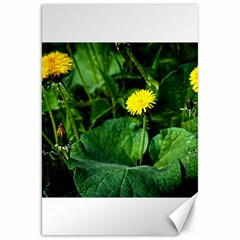 Yellow Dandelion Flowers In Spring Canvas 20  X 30   by FunnyCow