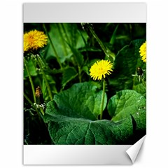 Yellow Dandelion Flowers In Spring Canvas 36  X 48   by FunnyCow