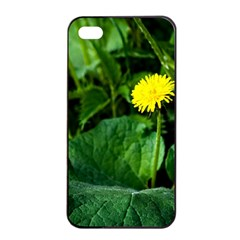 Yellow Dandelion Flowers In Spring Apple Iphone 4/4s Seamless Case (black) by FunnyCow