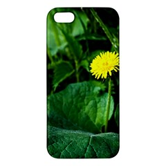 Yellow Dandelion Flowers In Spring Iphone 5s/ Se Premium Hardshell Case by FunnyCow