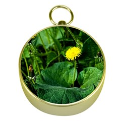 Yellow Dandelion Flowers In Spring Gold Compasses by FunnyCow