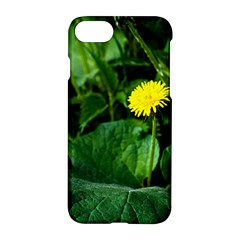 Yellow Dandelion Flowers In Spring Apple Iphone 7 Hardshell Case by FunnyCow