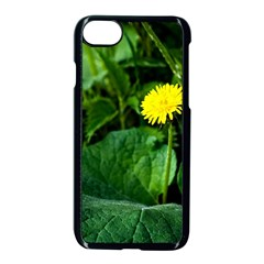 Yellow Dandelion Flowers In Spring Apple Iphone 7 Seamless Case (black) by FunnyCow