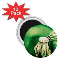 Dandelion Flower Green Chief 1 75  Magnets (10 Pack)  by FunnyCow