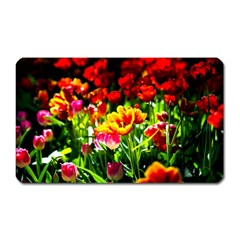 Colorful Tulips On A Sunny Day Magnet (rectangular) by FunnyCow
